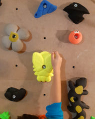 always_with_kids-presas-insectos-2